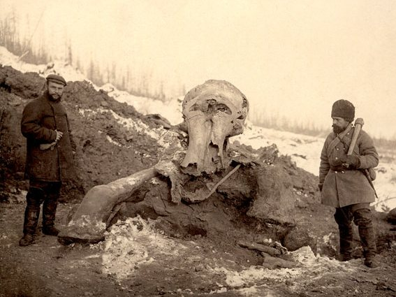 Berezovsky mammoth that was found in Siberia